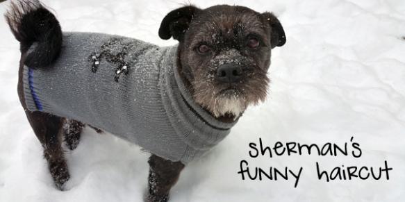 sherman-snow