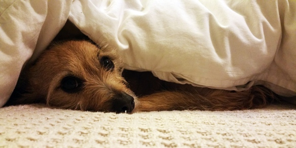 Walter-comforter