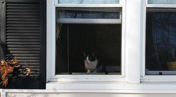 carol_window