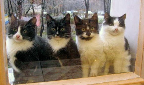 cats-in-window