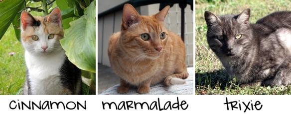 cinnamon-marmalade-trixie