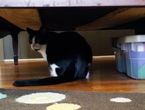 steve-under-bed