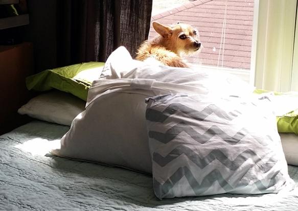 walter-bed-happy