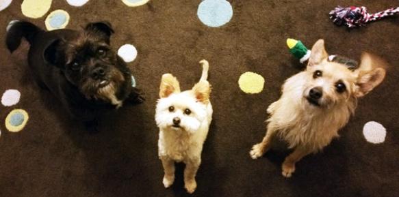 sugarship-dogs-treat