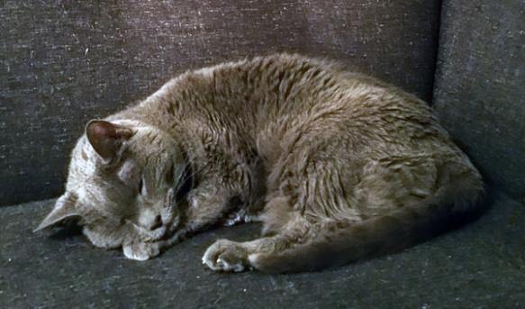violet-sleeping