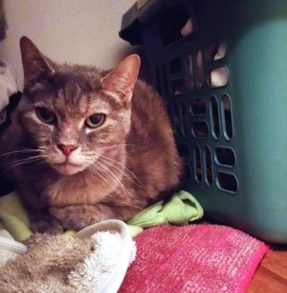 Ethel-closet-laundry