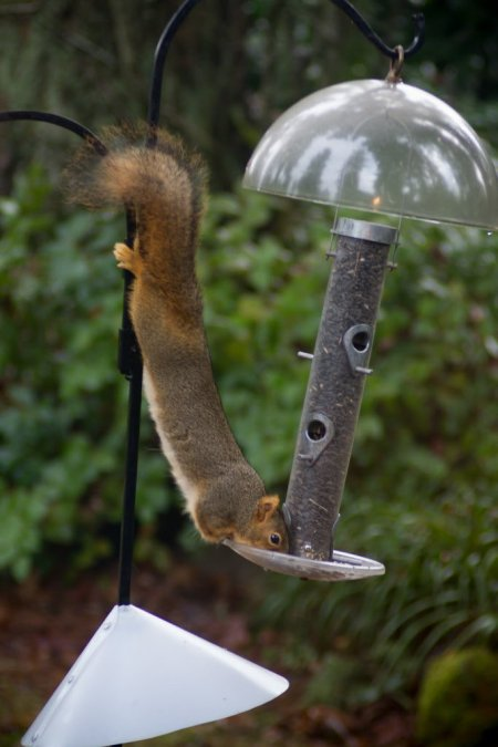 squirre-feeder-baffle-04