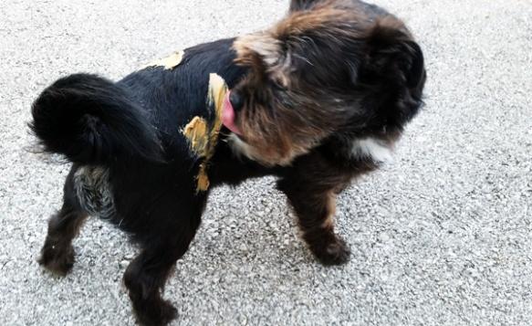 sherman-licking-barkbutter