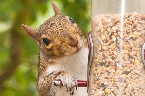smug-squirrel