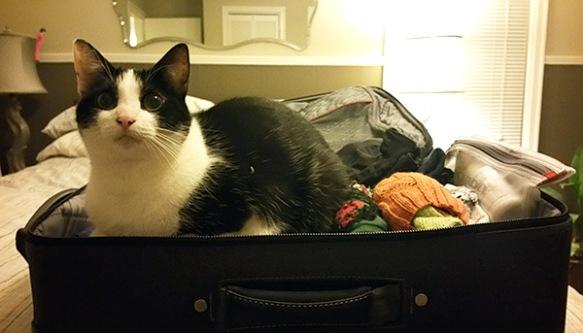 carol-suitcase